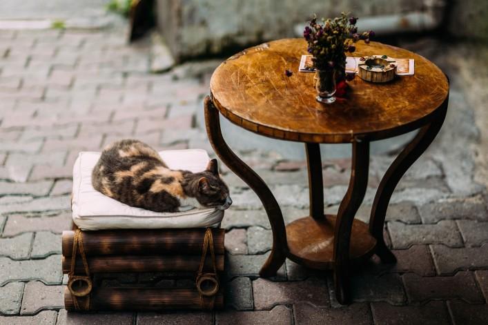 Katzencafés weltweit schlafende Katze