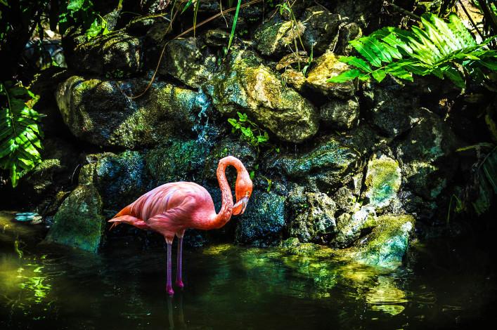 Pink flamingo iStock_000032205426_Large-2