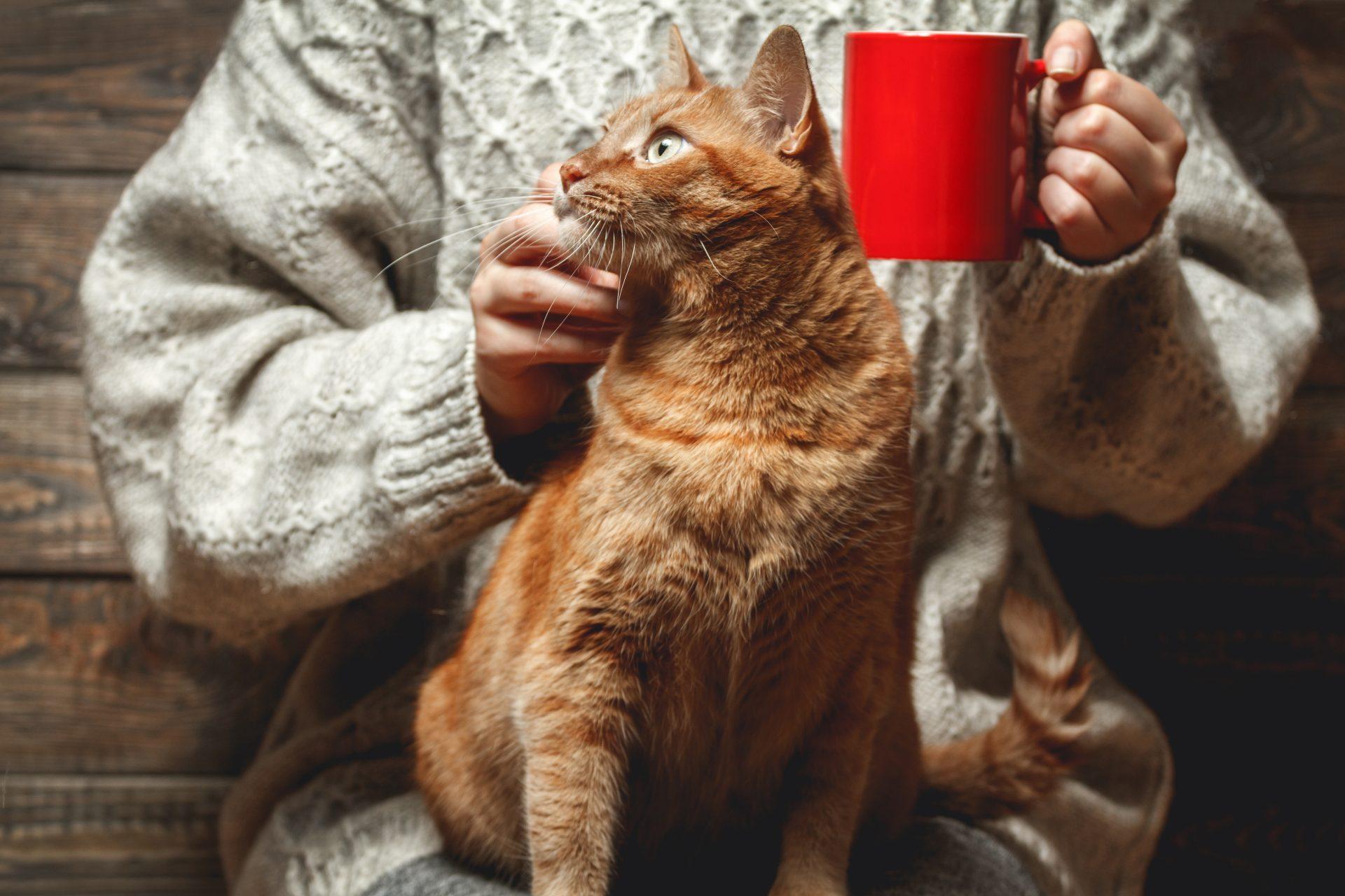 Frau mit Katze auf dem Schoss und Kaffeebecher in der Hand