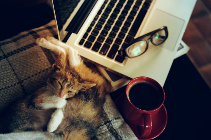 Katzencafes weltweit
