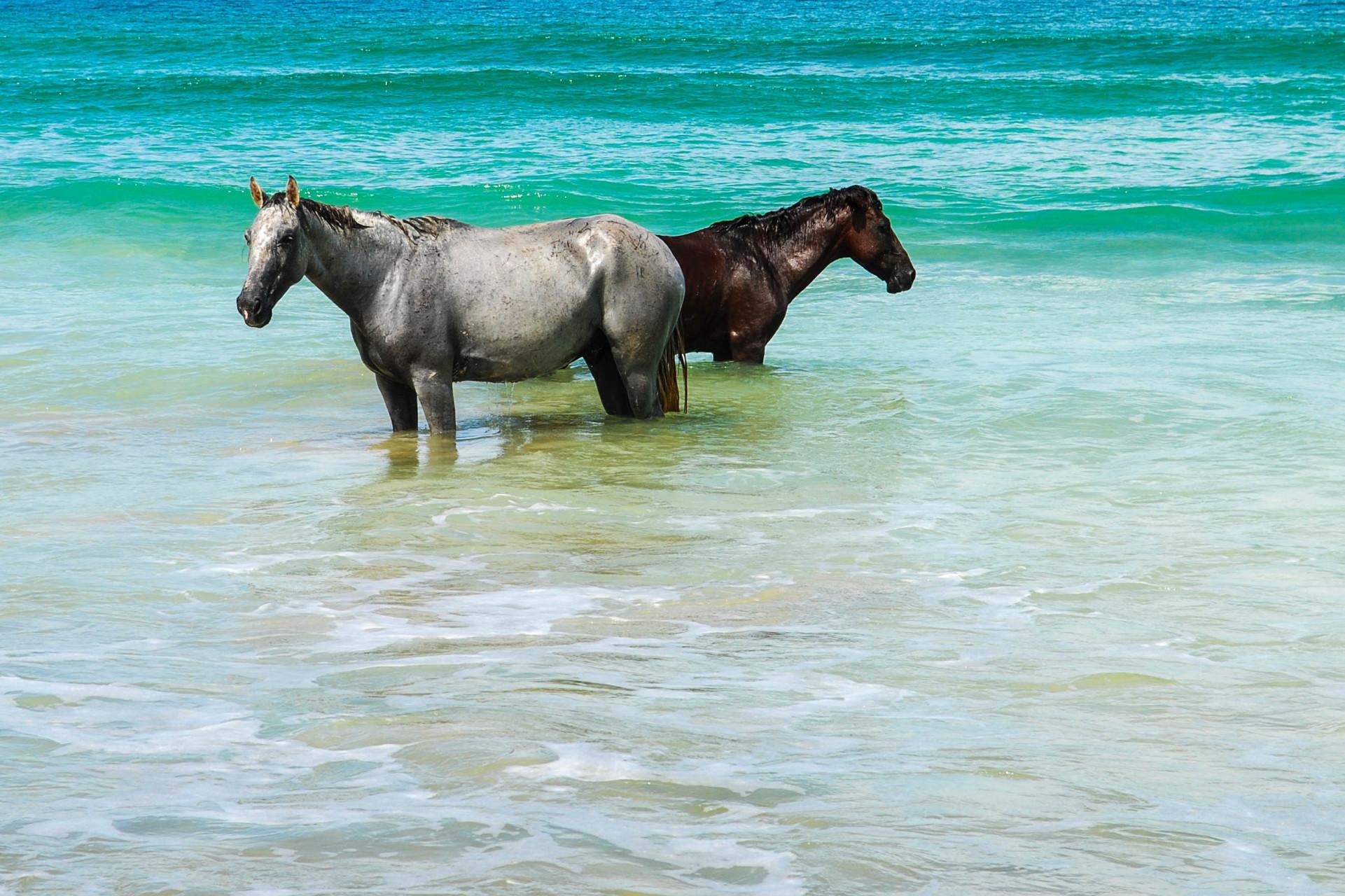Panama Tipps horse riding