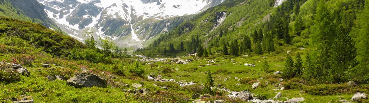 Rhododendren und mountain iStock_000043026908_Large-2