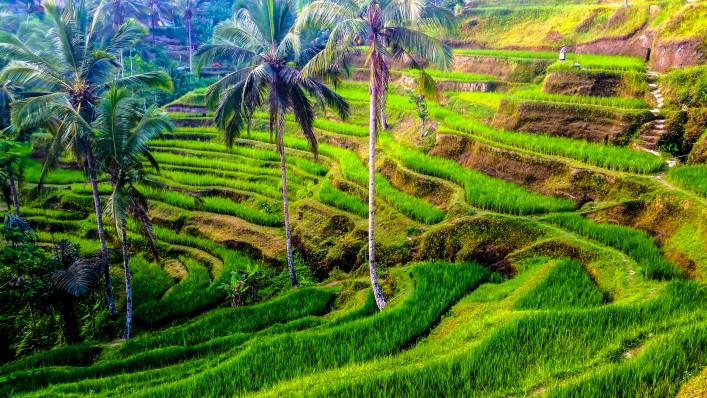Denpasar Reisterrassen Bali