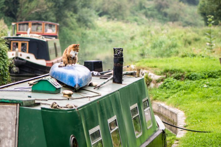 Cat sitting on canoe on roof of canal boat