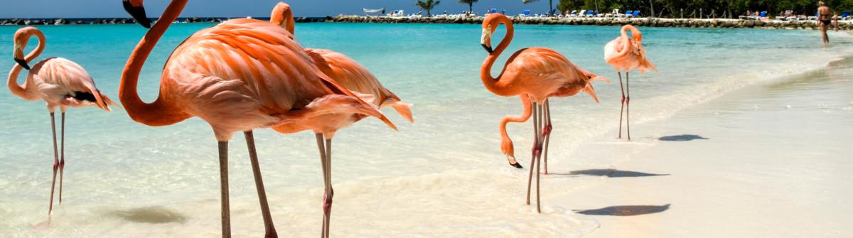 Aruba Flamingo Beach