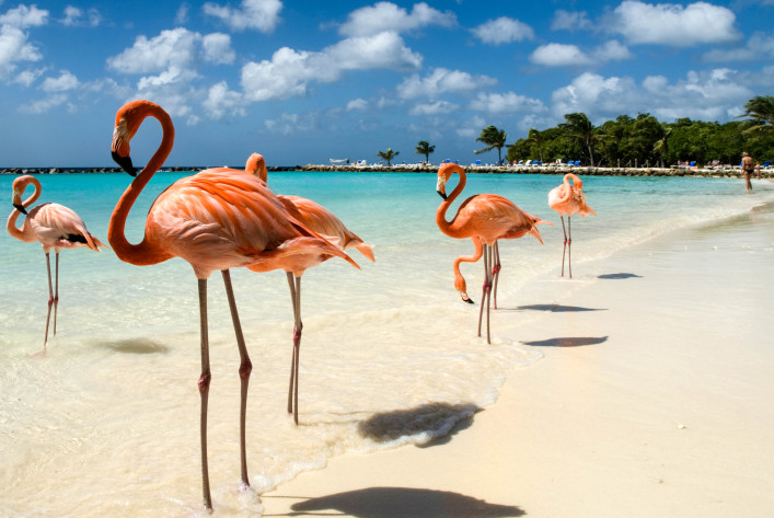 Aruba Flamingo Beach