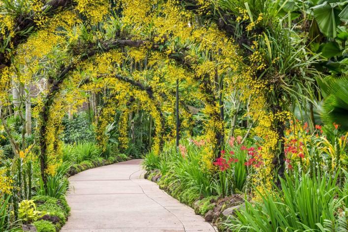 Singapur Tipps Botanischer Garten Orchideen Garten