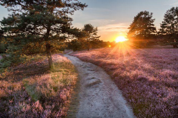 Lüneburger Heide Sonnenuntergang