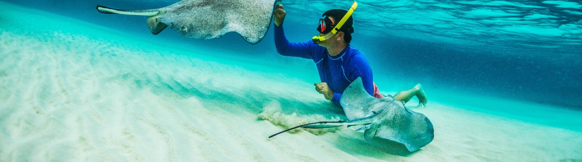 Snorkeler playing with stingray fishes