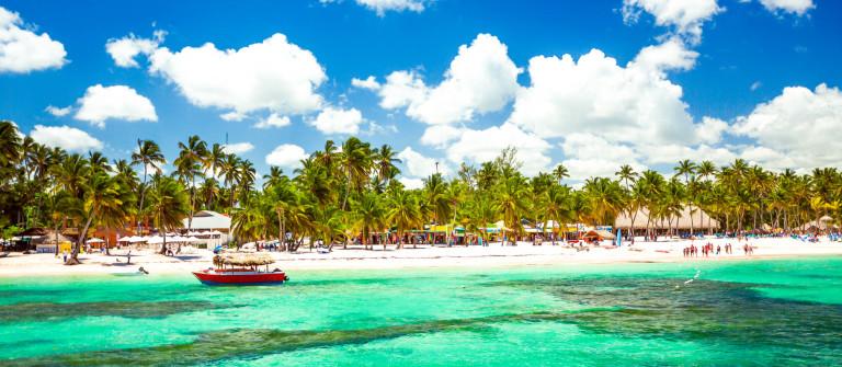 Palm trees on the tropical beach
