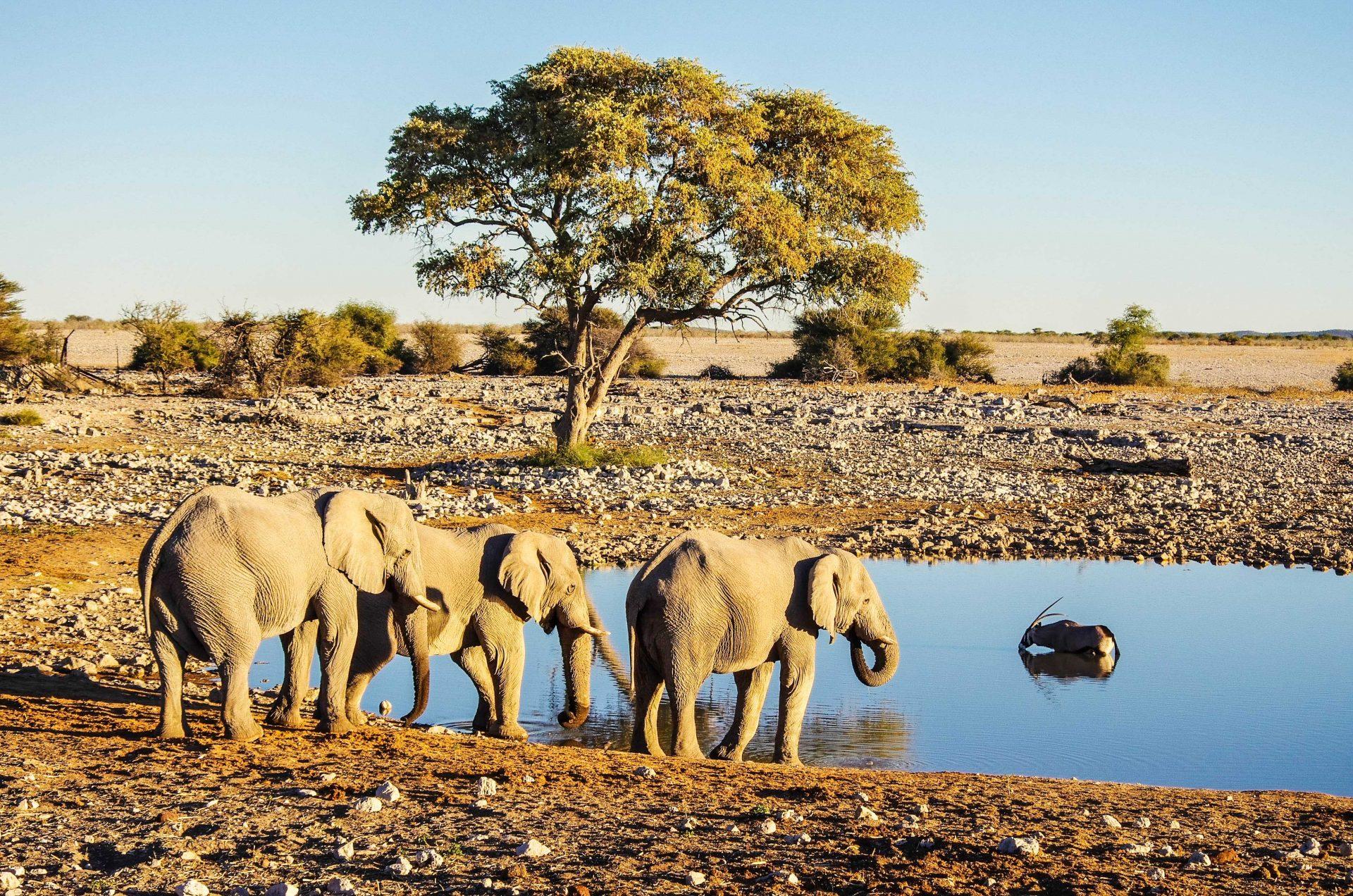 Elefanten im Nkasa Lupala Nationalpark