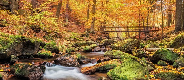 Bridge over Stream in Forest at autumn – Nationalpark Harz