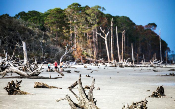 The Waking Dead Drehorte, Atlanta, TWD, Driftwood beach
