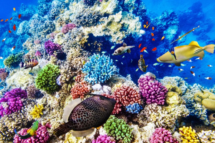 Wonderful and beautiful underwater world with corals and tropical fish shutterstock_261953732-2