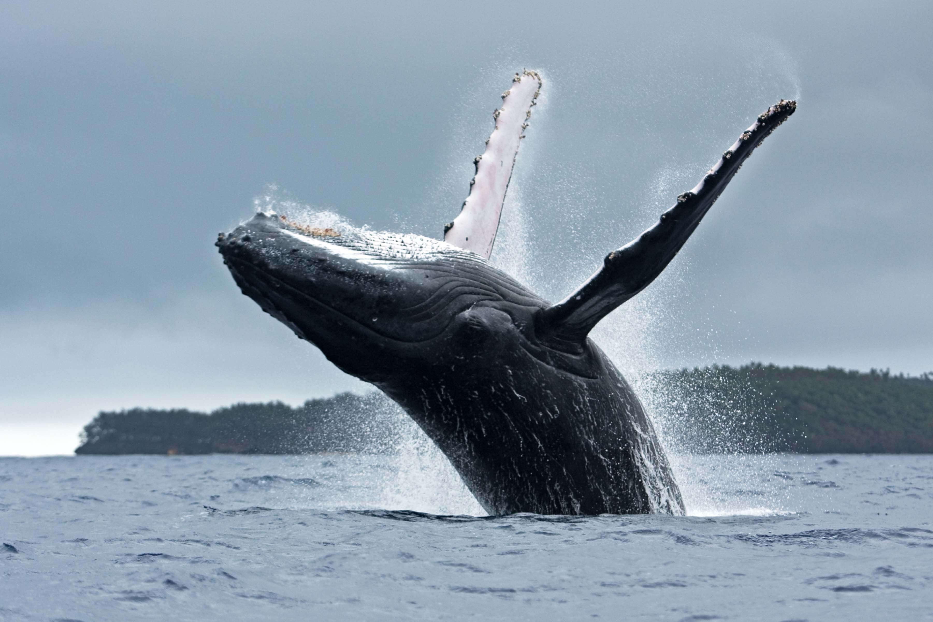 Beste reistijd om walvissen te zien