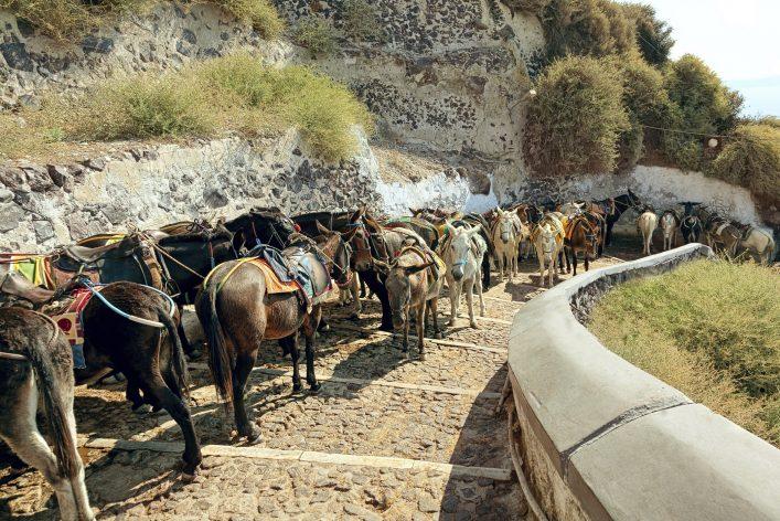 Santorini's donkeys
