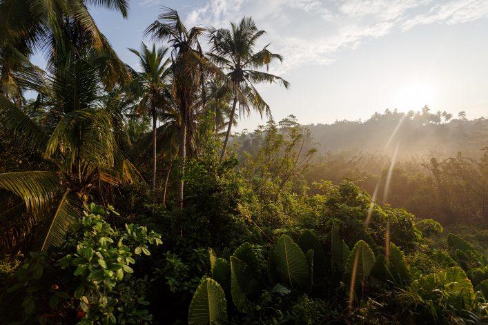 Der jamaikanische Dschungel in voller Pracht