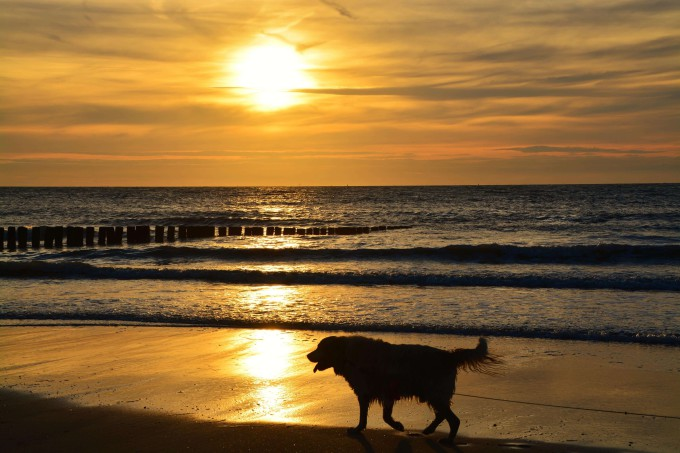 Silhouette of woman and dog at beach during beautiful sunset _shutterstock_462953761_klein