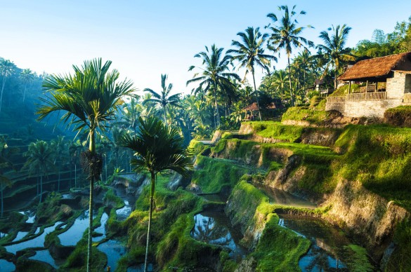 Bali tips Ubud
