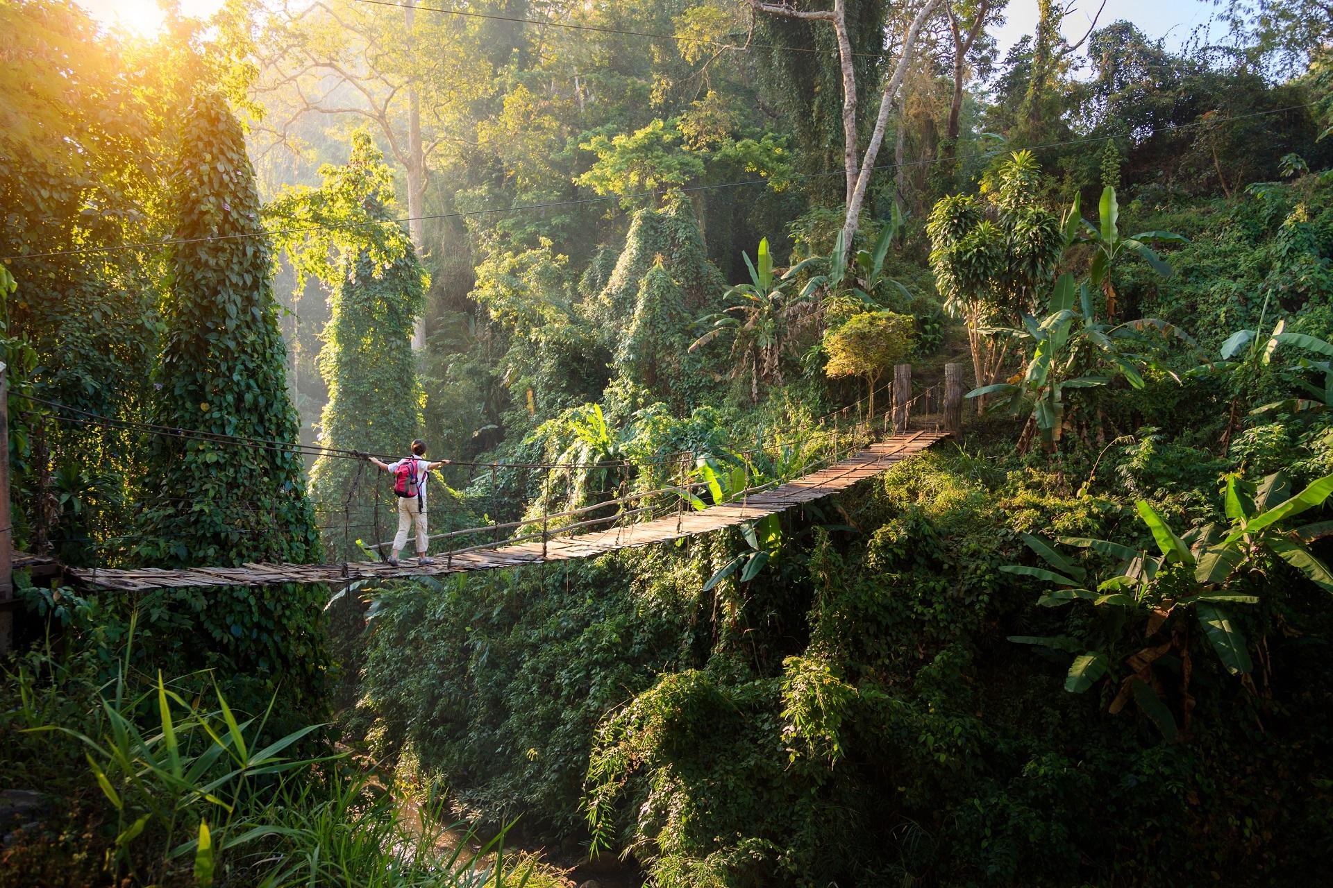 Wo Ist Das Dschungelcamp