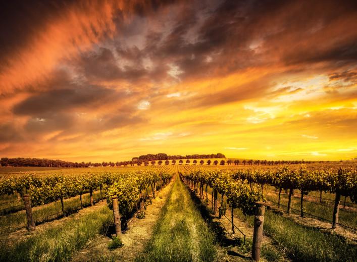 Südaustralien; Barossa Valley