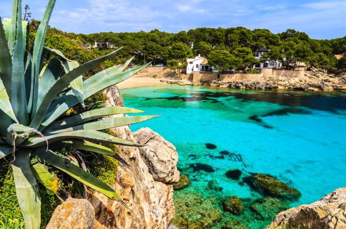 Agave palnt beach bay azure turquoise sea water hill pine tree, Cala Gat, Majorca island, Spain shutterstock_143322982-2