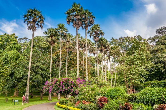 botanical garden kandy shutterstock_166963703