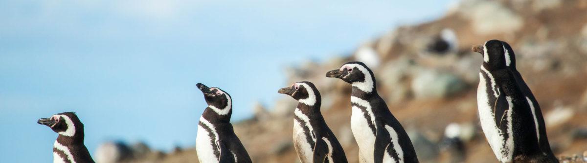 Pinguine sehen