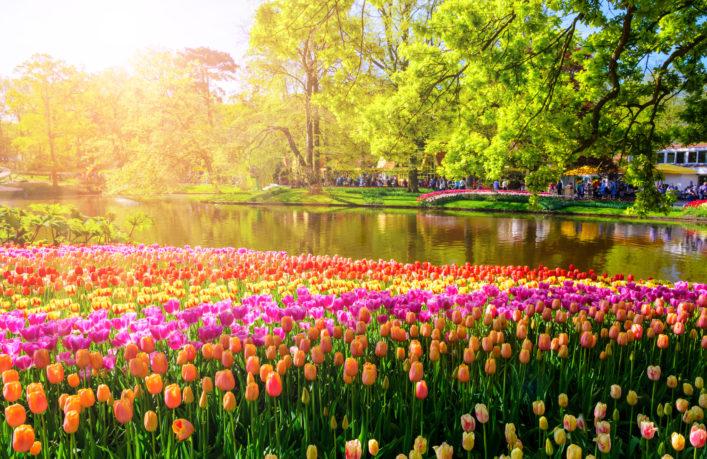 Colorful blooming flowers in Keukenhof park in Netherlands, Europe.