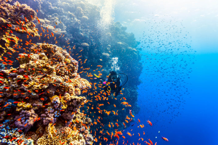 Scuba Diver Woman swims along the reef