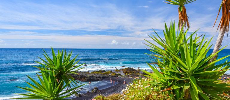 Green tropical plants on beach in Puerto de la Cruz, Tenerife, Canary Islands, Spain_shutterstock_241485676