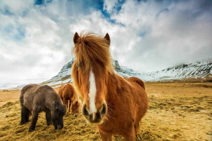 Island Tipps, Reisezeit, Sehenswürdigkeiten, Mietwagen
