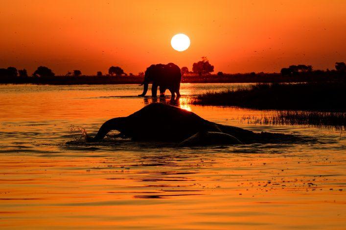 Botswana Afrika_shutterstock_345368774