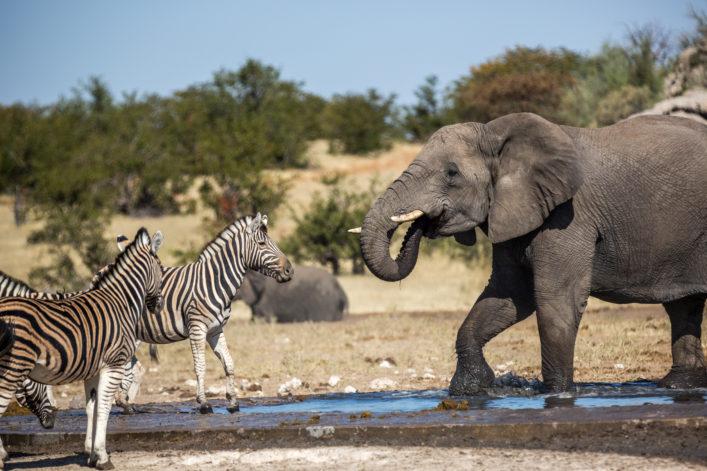 Etosha Nationalpark Namibia shutterstock_402715906