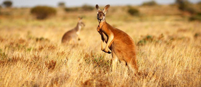 Australien Roadtrip Outback