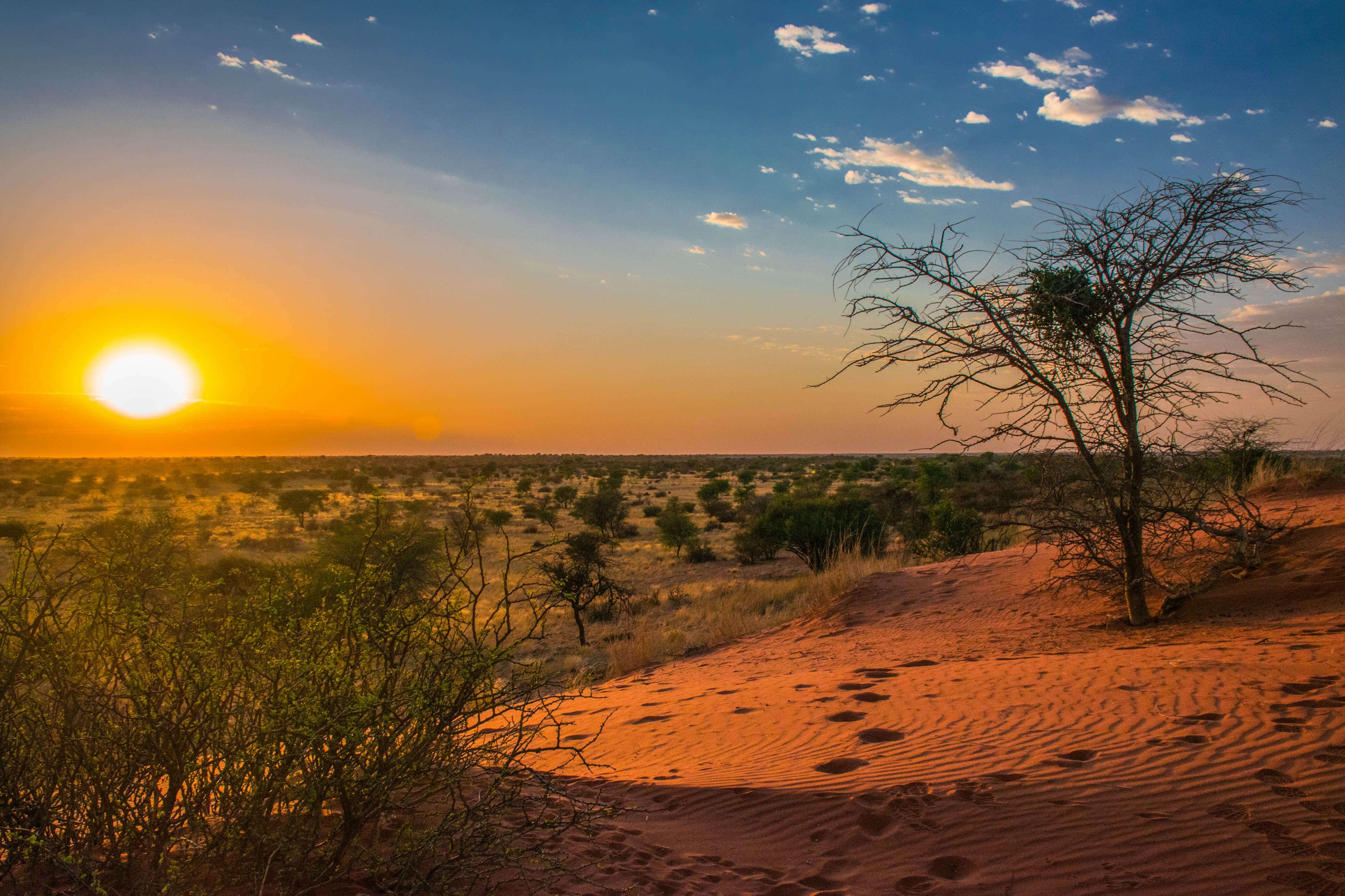Wüste Kalahari