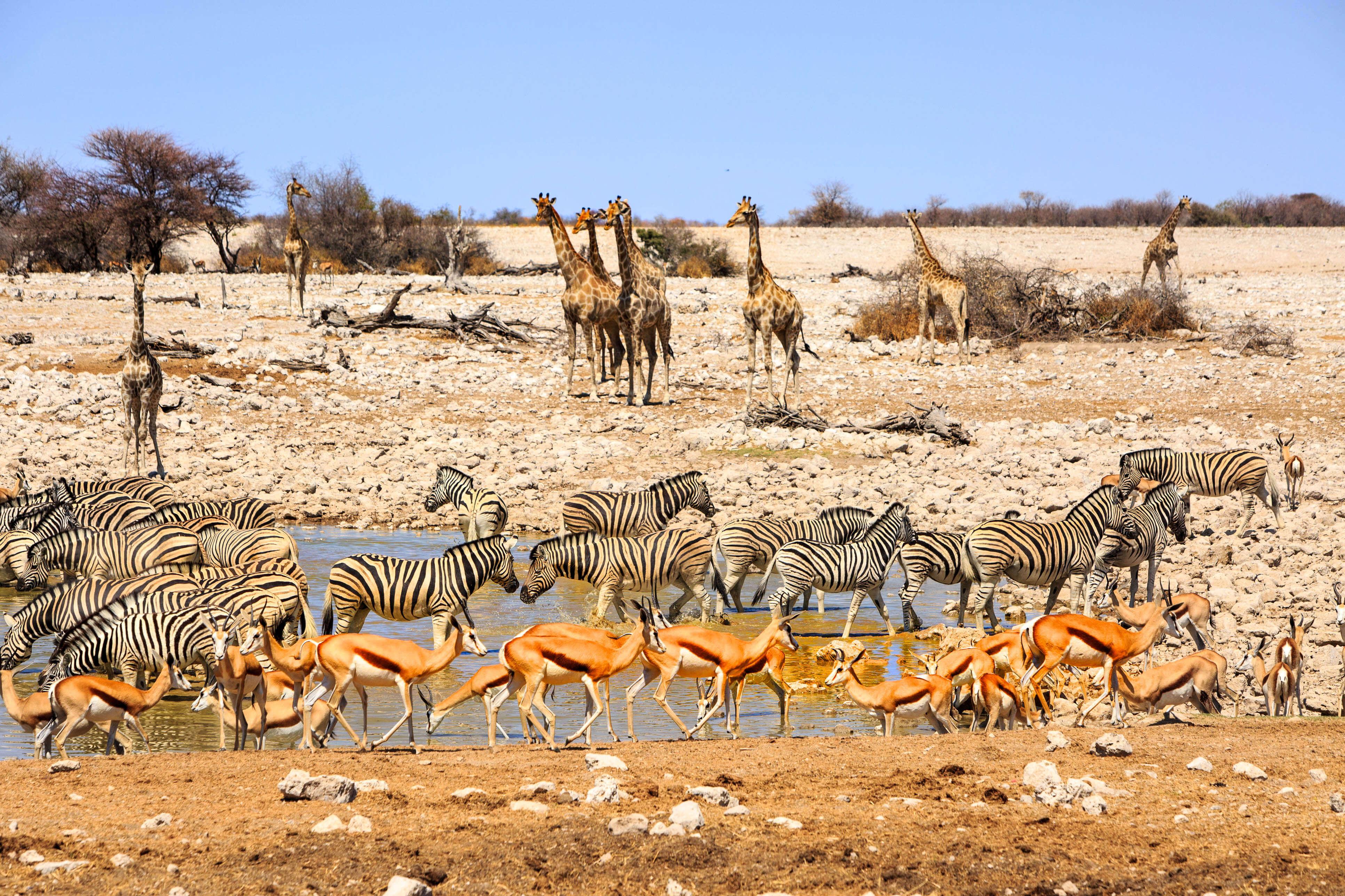 Themenwoche Namibia: Infos und Tipps für euren Urlaub ...