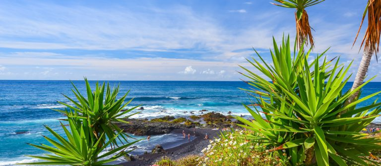 Green tropical plants on beach in Puerto de la Cruz, Tenerife, Canary Islands, Spain_shutterstock_241485676_pix2000