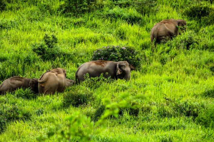 Malaysia Elefant