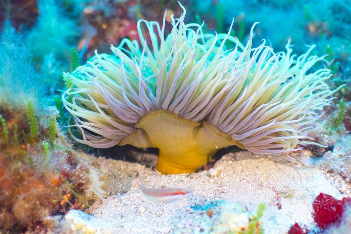 Tauchen auf Mallorca Unterwasserwelt