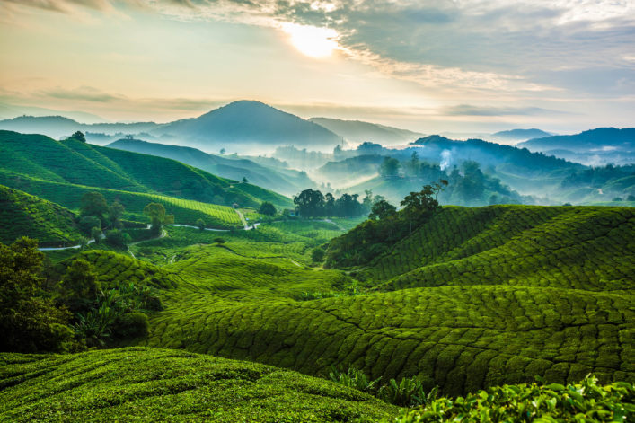 Cameron Highlands, Tee Plantage, Malaysia