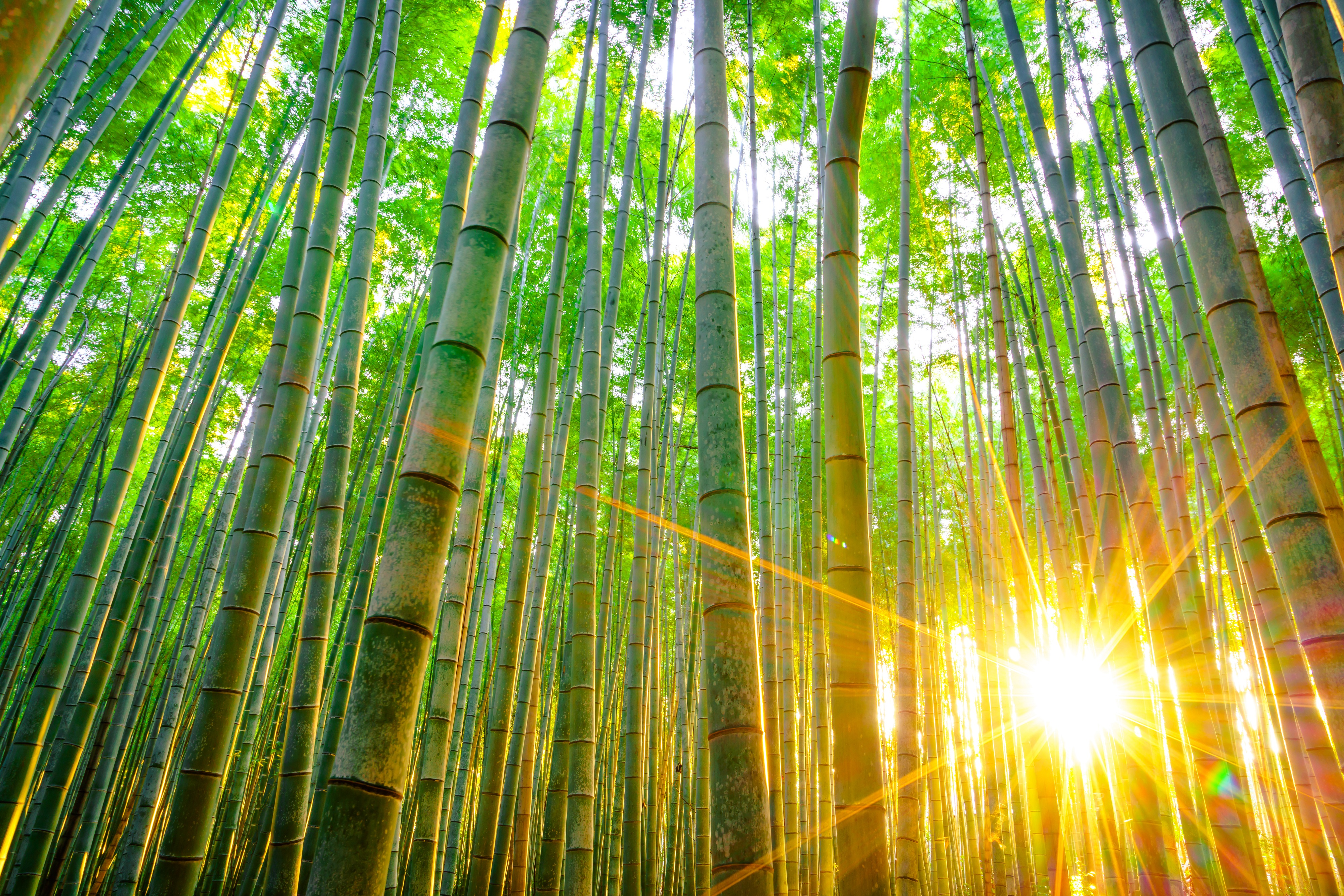 Bildergebnis für sonnenstrahlen bambus