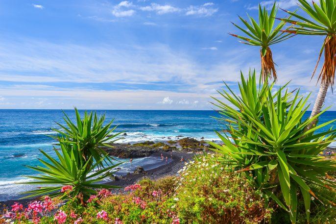 Green tropical plants on beach in Puerto de la Cruz, Tenerife, Canary Islands, Spain_shutterstock_241485676_pix2000