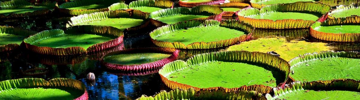 Botanischer Garten auf Mauritius