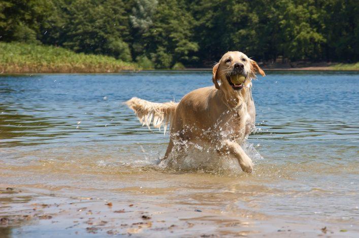 Mecklenburgische Seenplatte Hund