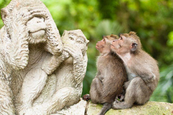 Sehenswürdigkeiten auf Bali Monkey Forest in Ubud