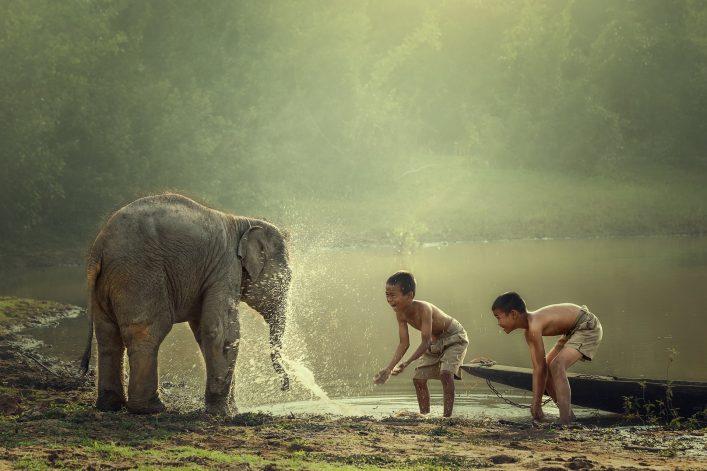 elepgants nature cambodia shutterstock_381859393