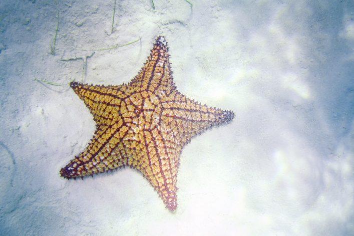 Saona Island Piscina Natural