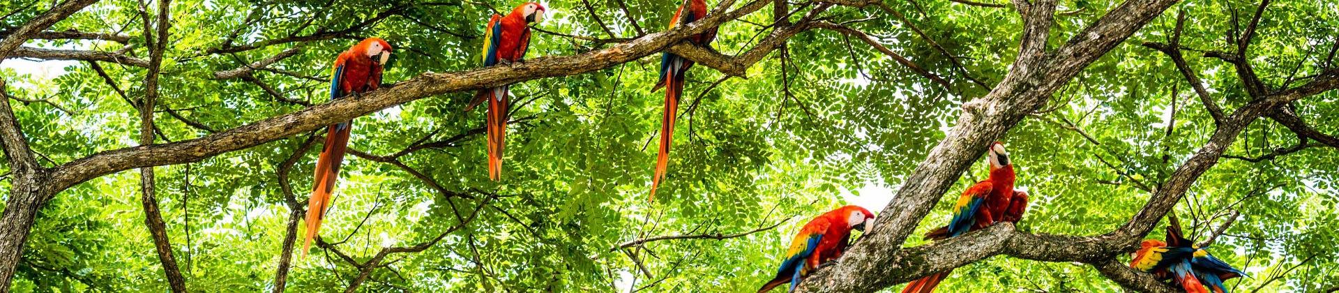 Kleurrijke papegaaien in Costa Rica