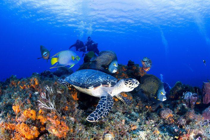 Cozumel Tauchen Unterwasserwelt